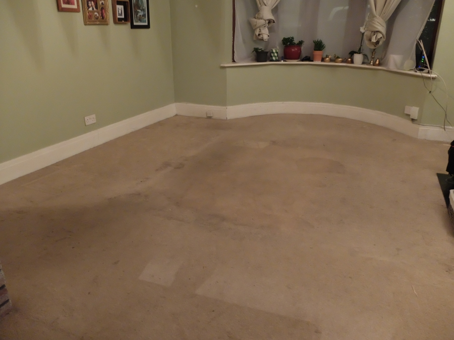 replacing front room carpet